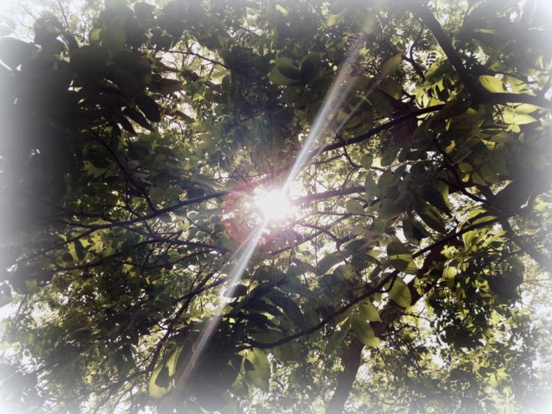 dappled_light
