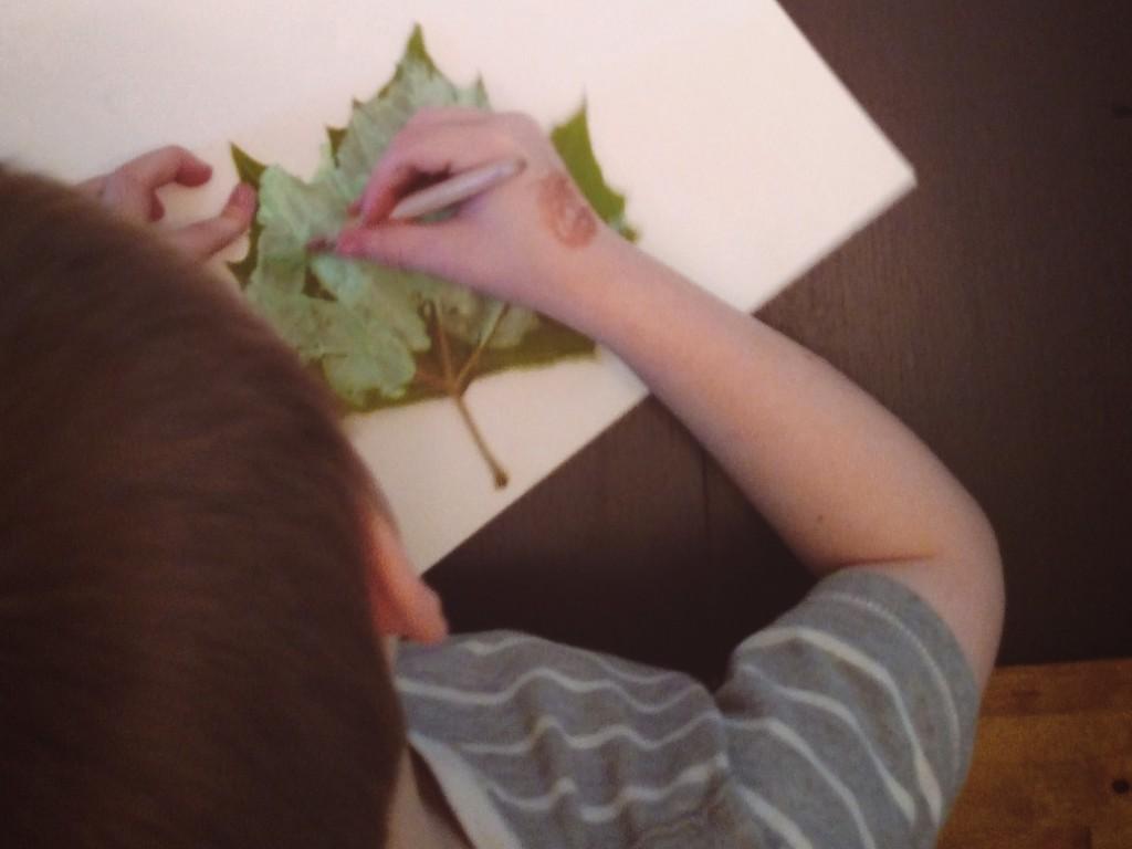 leafjosiahtop