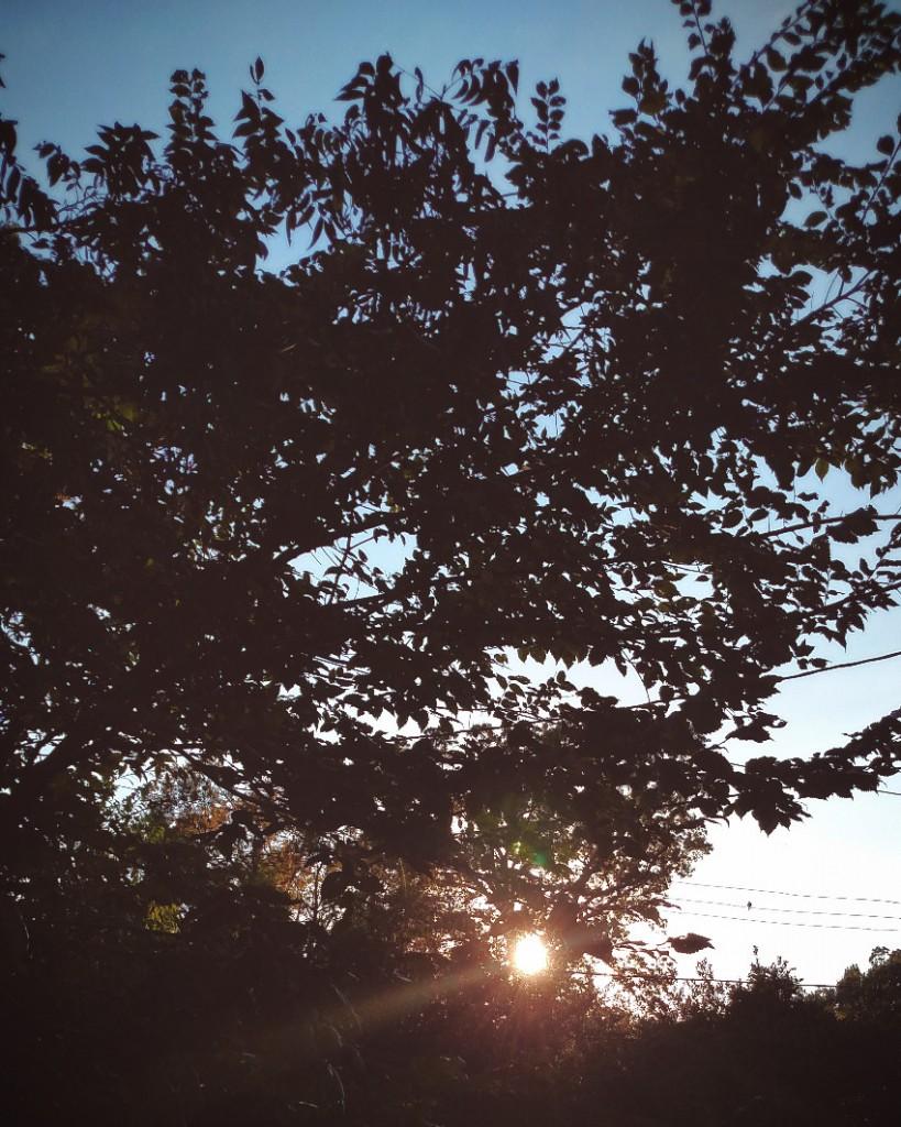 eveninglight1